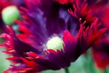 GARDENS-FLOWERS / by Joanne Erickson