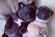 Furry little Friends