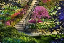 Glorious Gardens / by Mad Hatter