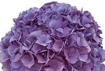 Perfect Purple