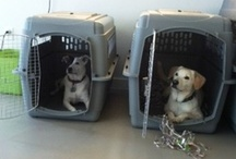 crate-loving critters / Travel crates make all the difference when it comes to keeping pets safe and calm during a trip.