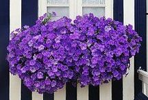 Window Box {love} / by Linda @ Calling it Home