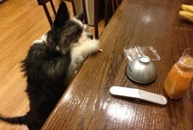 Kinn Videos / See how to use Kinn's pill concealing system for pets.