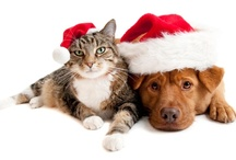 Holiday Pet Photo Contest / Pet owners could win Kinn products and retailer gift cards by entering the Jingle Paws holiday pet photo contest at http://kinninc.com/jinglepaws.