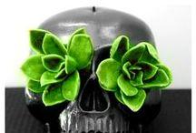 S U C C - U / succulents