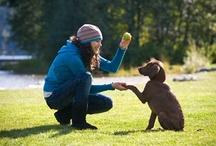 Dog Training and Care