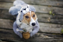 Funny & Furry / Cute and/or funny animal photos and GIFs. #dogs #funny #animals