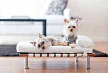 Cool Stuff for Dogs & Dog Lovers / Cool stuff for dogs or dog lovers.   #Cute #Dogs #Dog #Puppy #toys #beds