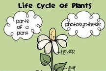 Plant Growth and Development / Making 3rd grade concepts available for students with disabilities learning at K-2nd grade level... / by Charlyne Allen