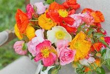 Flowers and Colours / Wedding