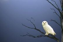 owl love...in memory of Nanna Lu / by Shelby Lu