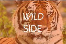 Wild Side / by Amrita Singh Jewelry