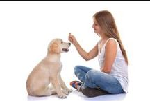 Behave! / Pet training tips and articles