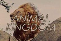 Animal Kingdom / #animal #jungle #indian #jewelry #hearmeroar #lion #owl #peacock #snake #panther #cougar #leopard #elephant #gold #silver #inspired #cat #fierce #bold #statementjewelry
