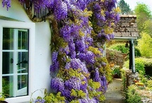 My Garden Home... / by Enid Berrios