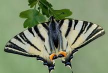 Butterflies...  / by Enid Berrios