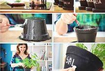Plantas, vasos e jardins / inspirações