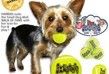 Small Dog Toys / Toys for Little Dogs, Toy Dogs and Puppies