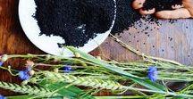 Herbs / Zioła