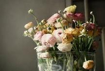 Flower + Plant / by meg