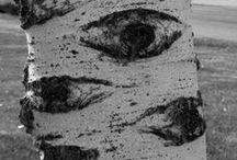 Eye See Things