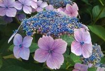Blooming - in bloei / Flowers and plants blooming in The Netherlands / Bloeiende planten en bloemen in Nederlandse tuinen / by tuinsms.nl