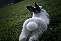 Bunnies and other Bundles of Adorable / by Amy Alexander