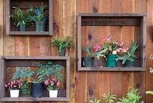 Garden + Outdoors / by Mariko