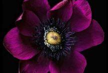 Flower Show / by amy coady