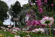 Gardening / Gardening ideas and various blooming flower beds. / by Karin Heimburger