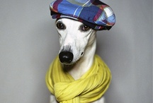 Animals: in Hats / Oh, the crafty internet and its amazing animal accessories.  / by amy coady