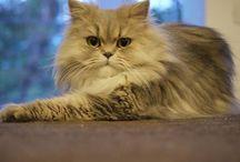 Feline Fur Babies / by Gillian Craven