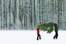 Christmas / by Lynne Rambling