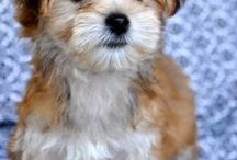 Puppies / by Lisa Wikstrom