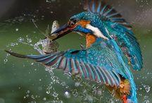 Birds / by Yongsheng Wu