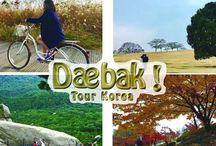 Daebak Tour / Backpacker tour and travel