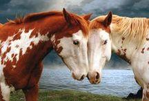 Horses, Donkeys, Mules