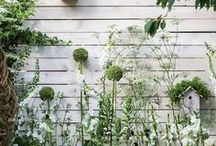 Garden & Outside inspiration