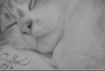 Cats.. / they are my favorite pets
