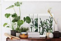 Plantes / Green / Green jardinage balcon jardin vert éclogie terrarium Tutoriel custo DIY