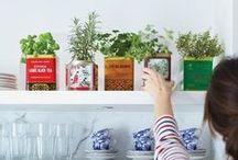 Herbs / by Una cucina tutta per sé (Blog)