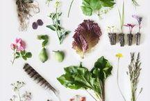 Herbier / Planche botanique / Herbarium / Herbier / Herbarium