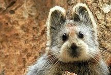 Capybara, Wombats, and Other Odd 'Uns / capybara, wombat, sloth anteaters and other strange adorable critters