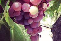 Viña - Vino / Larboledaperdida http://larboledaperdida.blogspot.com.es