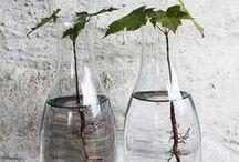 Plants are rooting in glass.. / De nieuwe trend...