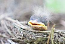 Bird's nests..