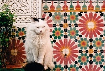 Morocco / Beautiful images and spaces from the magical country of Morocco