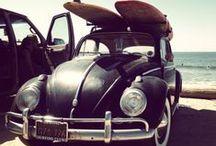~♡ Beetles ♡~