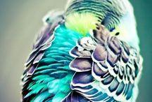 Blue Birds / by Drake Zapatos