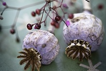 Nature: Pods and seeds